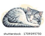 cat. wall sticker. color ... | Shutterstock .eps vector #1709395750
