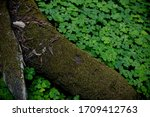 Moss Covered Tree Trunk...