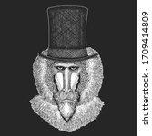 Baboon  Monkey  Ape. Top Hat ...