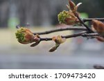 spring. blossom foliage on a... | Shutterstock . vector #1709473420