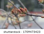 spring. blossom foliage on a... | Shutterstock . vector #1709473423