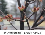 spring. blossom foliage on a... | Shutterstock . vector #1709473426