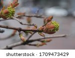 spring. blossom foliage on a... | Shutterstock . vector #1709473429