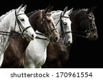 Portrait Of  Four Horses In...