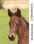 A Close Up Of A Baby Horse On...