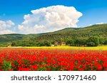 Beautiful Landscape With Field...
