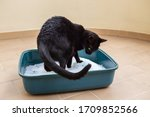 A Black Cat In The Toilet...