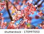 pink flower | Shutterstock . vector #170997053