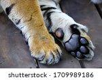 Tiger Claw Sleep Safe On Wood...