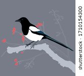 Pica Pica Magpie Vector Drawing ...