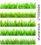 fresh green grass isolated on... | Shutterstock . vector #171020684