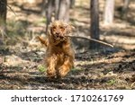 english cocker spaniel dog is... | Shutterstock . vector #1710261769