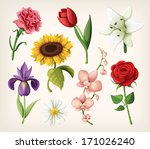 set of romantic summer flowers | Shutterstock .eps vector #171026240