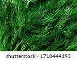 Fresh Green Dill Background....
