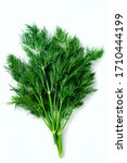 Fresh Dill On White Background  ...