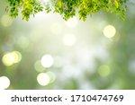 Green Leaves  Blurred...