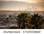 Famous Los Angeles Palm Trees...