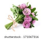 Red Clover On A White Background