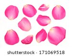 Stock photo a collection of pink rose petals on a white background 171069518