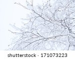 Winter Branches Of Trees In...