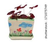 Purple Shamrock Flower On Pot...