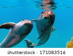 Two Funny Dolphins Smiling...