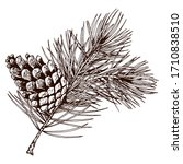 Pine Branch With Cone Isolated...
