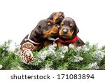 group of dobermann puppies in... | Shutterstock . vector #171083894
