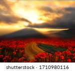 Dirt Road Among Poppy Fields At ...