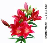 A Red Lily Bouquet Isolated...