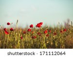 poppies field | Shutterstock . vector #171112064