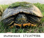 Closeup Photo Of A Turtle In...