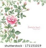 Watercolor Illustration Of Rose ...