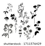 silhouettes of wild flowers.... | Shutterstock .eps vector #1711576429