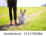 Portrait Golden A Puppy A Dog A ...