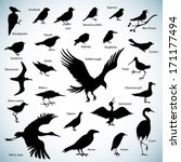 Set Of Birds Silhouettes On...