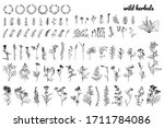 wild herbs  drawn by a black... | Shutterstock .eps vector #1711784086