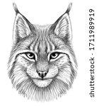 lynx. sketch  drawn  graphic... | Shutterstock .eps vector #1711989919