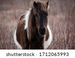 Wild Pony In Grayson Highlands...