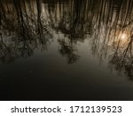 Beautiful Reflection Of Trees...