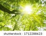 Sunlight Filtering Through The...