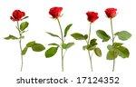 four red roses on white... | Shutterstock . vector #17124352