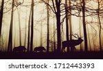 background animal in forest... | Shutterstock . vector #1712443393