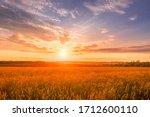 Scene Of Sunset On The Field...