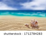 Two Shells On A Background Of...
