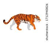Tiger. Illustration Of Walking...