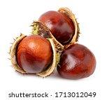 Chestnut Isolated On White...