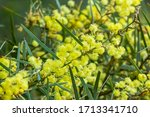 Closeup Of The Yellow Flowers...
