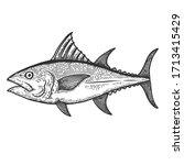 illustration of tuna fish in...   Shutterstock . vector #1713415429