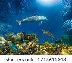 Underwater World. Coral Fishes...